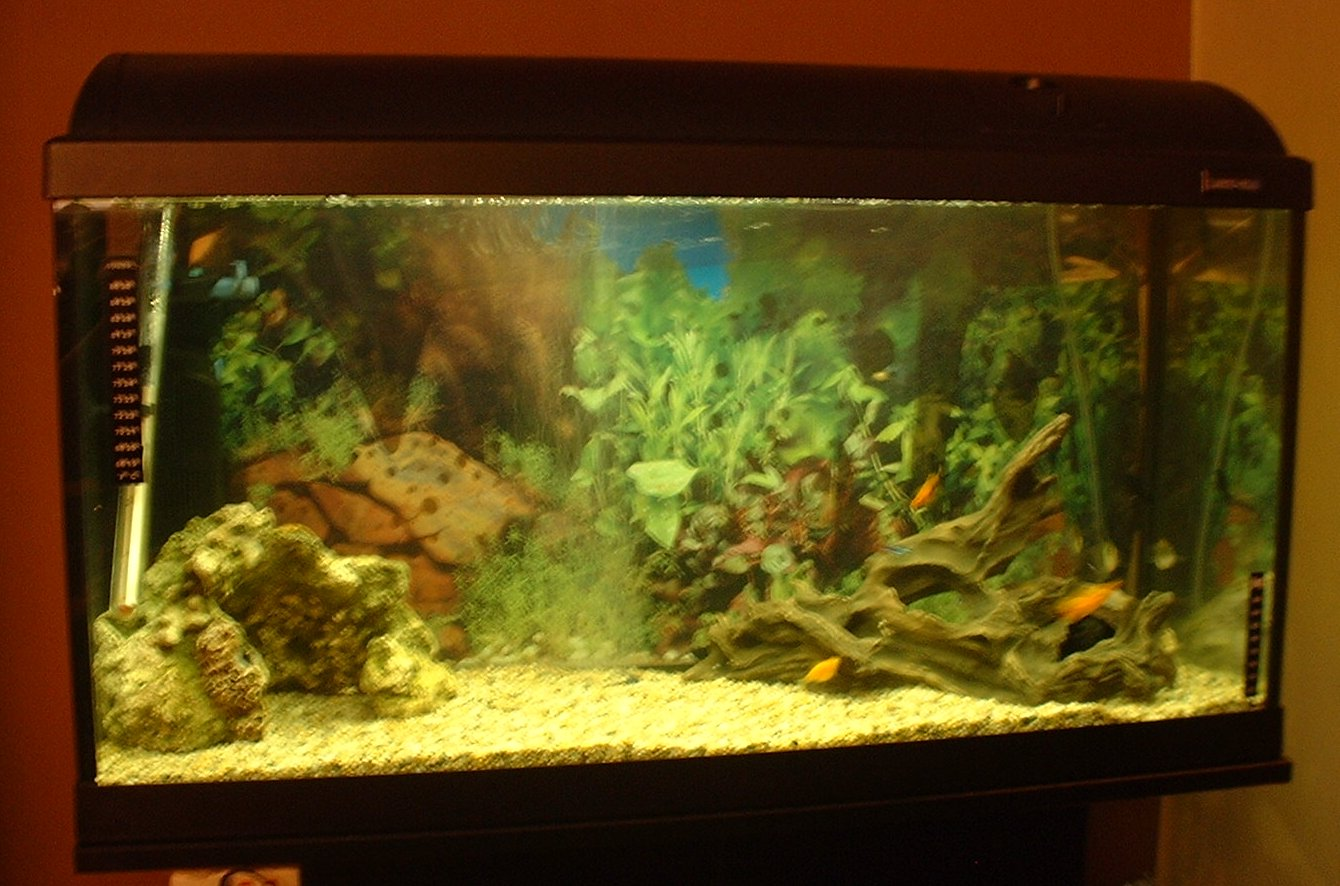 New Fish Tank Blogtribe